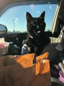 Cat eating McDonald's